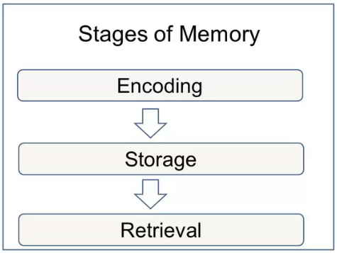 stages_of_memory